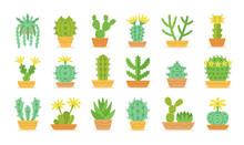 Different Types Of Cactus In P...