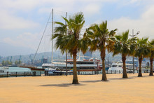 Seaside Promenade With Palm Tr...