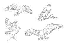 Set Of Falcons In Contours - Vector Illustration