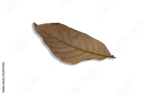 Brown dry leaves with a white patterned background Wallpaper Mural