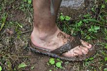 Muddy Hiking Trail In Costa Ri...