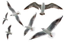 Set Of Seagulls Flying Isolate...