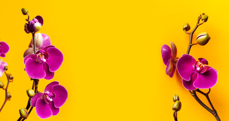 Fototapeta na wymiar Beautiful purple Phalaenopsis orchid flowers on bright yellow background. Tropical flower, branch of orchid close up. Pink orchid background. Holiday, Women's Day, March 8, Flower Card flat lay