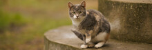 Maneki Neko Grey Kitten Sitting On The Steps In The Yard On A Cloudy Day