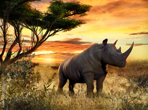 Fotografie, Obraz African Rhino in the Savanna at Sunset