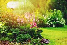 Beautiful Summer Garden View, ...