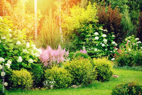 mixed border in summer garden with yellow spirea japonica, pink astilbe, hydrangea. Planting together shrubs and flowers
