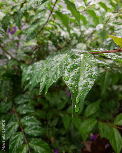 water-drops on a green leaf - 326131763