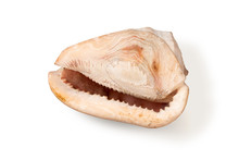 Giant Shell Of A Sea Gastropod Cassis Cornuta In Pink Tones Isolated On White Background