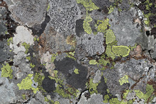 Grey Stone Surface Covered Wit...