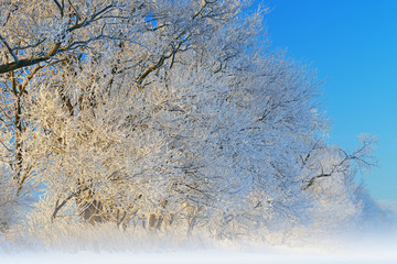 Fototapeta Zima Foggy winter landscape of frosted trees in a rural setting, Michigan, USA