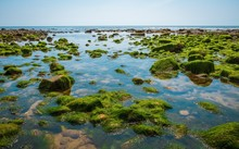 Rocks And Moss On The Seabed A...