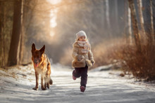 Portrait Of Little Girl And Young German Shepherd  At Winter Forest