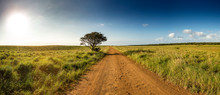 Panoramic View With Gravel Road And Lonley Tree Into South African Savanna Of ISimangaliso Wetland Park (high Resolution)
