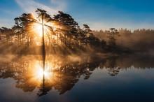 Stunning Sunrise Through Trees...