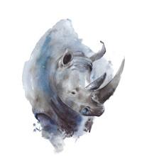 Rhinoceros Portrait African Wi...