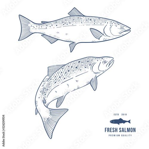 Fototapeta Ink sketch of salmon obraz