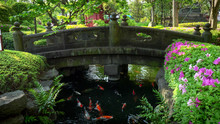Wide View Of A Bridge And Koi ...