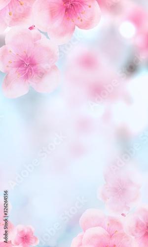 vertical Japanese Spring Sakura cherry blossoms 240x400 size website fat skyscraper banner background Canvas Print