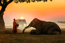 Elephant Made Merit A Monk's B...