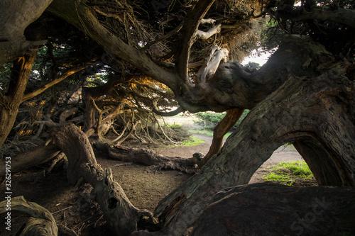 Fotografering Windblown Tree