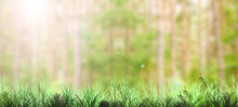 Green Grass Field With Blurred...