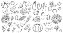 Vegetables, Farm Food Vector I...