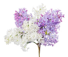 Bunch From White And Violet Li...