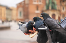 Feeding Pigeons From Hand On B...