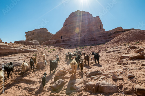 Foto Herd of goats on feed among tourists near the temple of Ad-Deir in the ancient city of Petra, Jordan