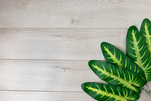 Tropical Leaves Isolated On Wo...