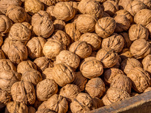 A Pile Of Raw Walnuts Being So...