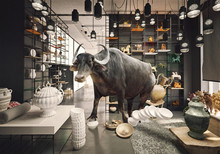 Bull In A China Shop.