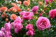 Blumen 1184