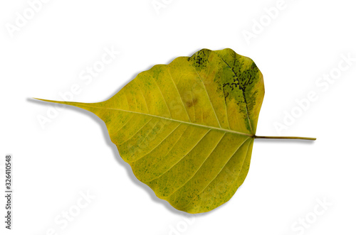 Green and yellow leaves blurred with a white patterned background. #326410548