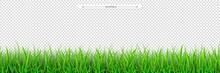 Green Grass Seamless Border. E...