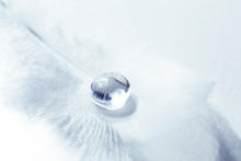 Bird Feather With A Transparen...
