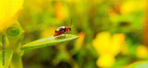 Photo betel on a green leaf
