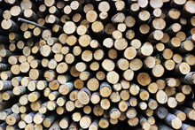 A Large Pile Of Chopped Thin Logs