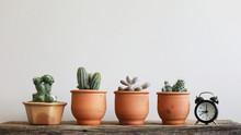 Cactus Plants In Brown Clay Li...