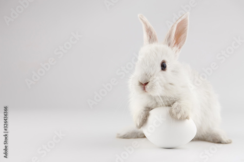 Photo Easter bunny rabbit with white egg