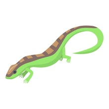 Salamander Icon. Isometric Of Salamander Vector Icon For Web Design Isolated On White Background