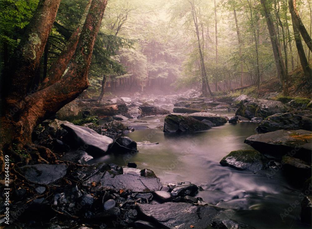 Fototapeta Along the Red Path, Bushkill Falls PA.