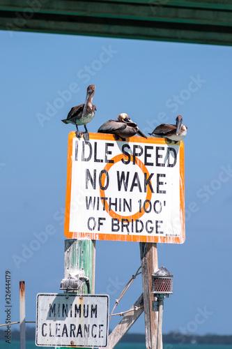 Obraz na plátně Vögel an der Westküste Floridas