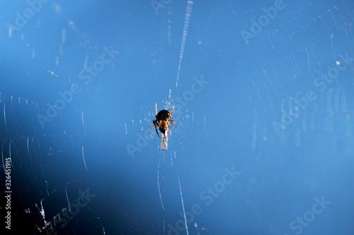 Petite araignée et sa proie dans sa toile Canvas Print