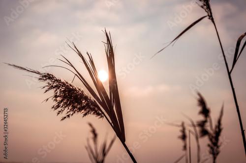 Fototapeta into the sun