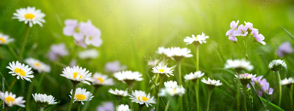 Fototapeta Spring wild flowers background.