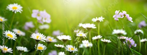 Fototapeta Spring wild flowers background. obraz
