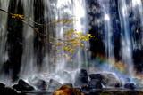 Fototapeta Tęcza - 紅葉と滝と虹と