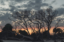 Silhouette Of Dead Trees With A Cloudy Sunset On Driftwood Beach, Jekyll Island, Georgia...